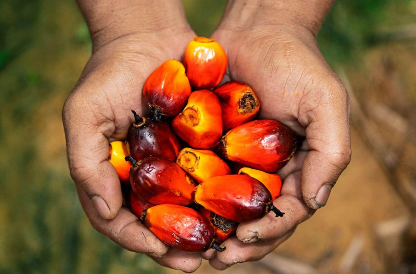 Investment Chief Says Indonesia's Nickel Industry to Leapfrog Palm Oil